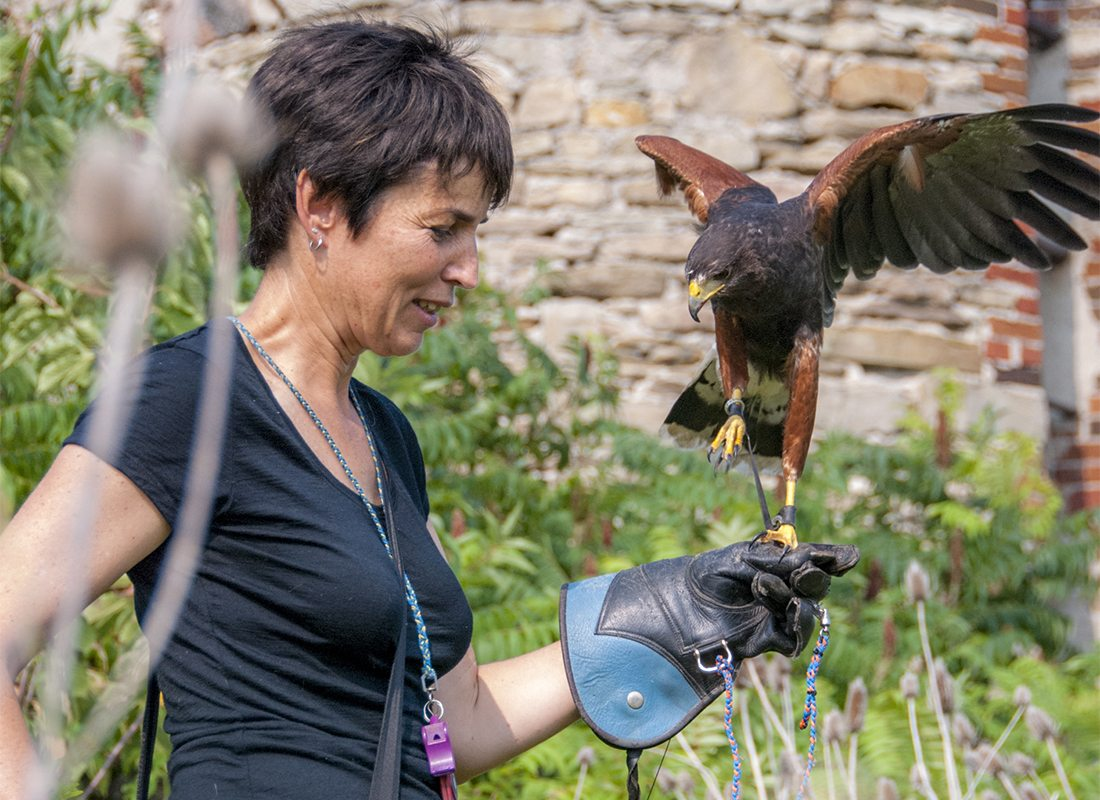 Falconry at work, Louise and Amadeus