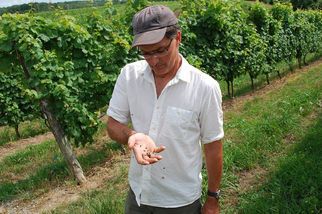 Dave in the vineyard with lady bugs